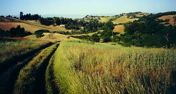 The Arastradero Preserve in Palo Alto
