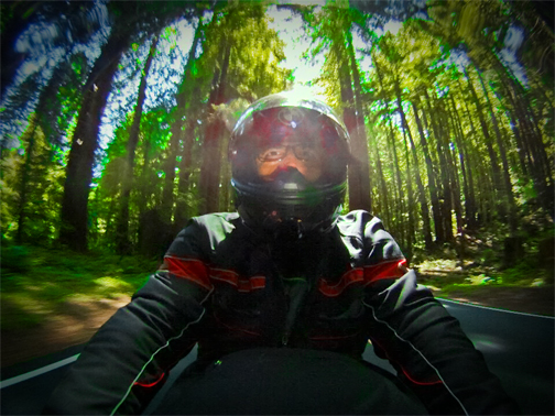 Dan in the Redwoods